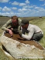 <h5>Inspecting our find</h5><p>PhD student Kyle Ferguson (left) and Dr Kenny Travouillon (right) check-out our Diprotodon plaster cast after we managed to carry it to the flat part of the nearby field.</p>