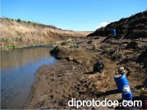 The Diprotodon skull was found eroding out of this creek bank