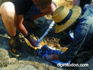 Plastering fossils